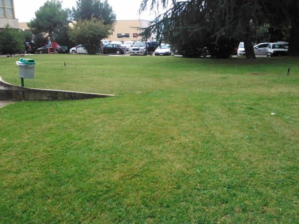 cura del verde ospedale Mazzoni_1