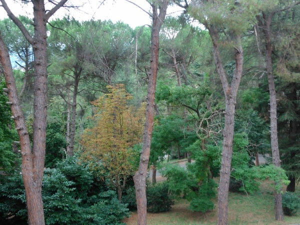 parco EX Luciani alberi ad alto fusto